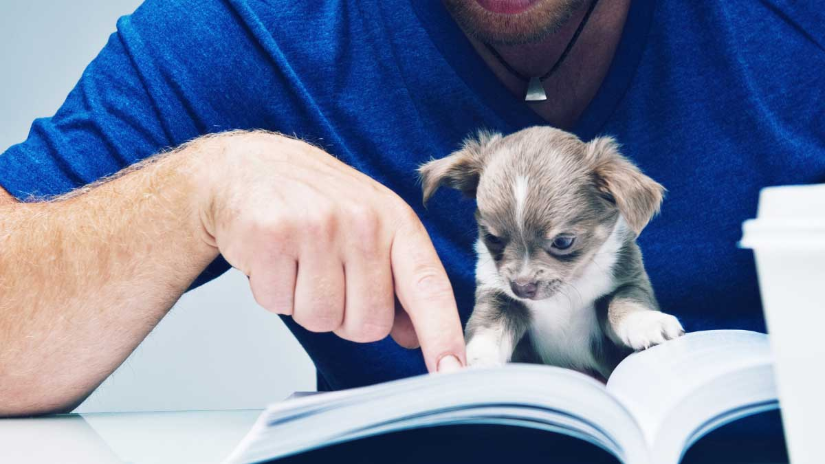 A Puppy Training Guide that cover the Basics